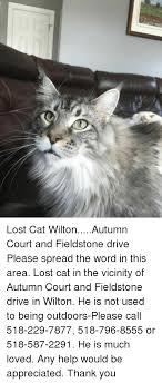 Lost Cat Meme - lost cat wiltonautumn court and fieldstone drive please spread the