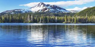 most beautiful forests in america american forests