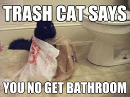 Bathroom Meme - cat bathroom meme 4k wallpapers 2018