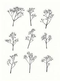 baby s breath flower learn when to plant baby s breath seed for weddings in our how to