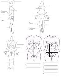 Dog Body Parts Anatomy Anatomy And Physiology Body Regions Www Uocodac Com