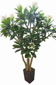 artificial plants and flowers artificial plant frangipani tree