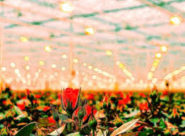 types of grow lights a beginner s guide to hydroponic grow lights