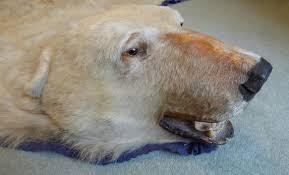 Taxidermy Bear Rug Polar Bear Rug