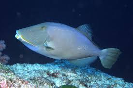 triggerfish album on imgur