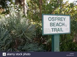 100 osprey beach house growing up osprey wildlife reality