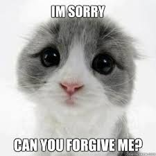 Cute Kitty Memes - im sorry can you forgive me cute cat quickmeme