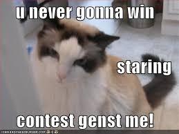 U Win Meme - u never gonna win staring contest genst me cheezburger funny