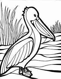 plush design bird coloring pages parrot 224 coloring