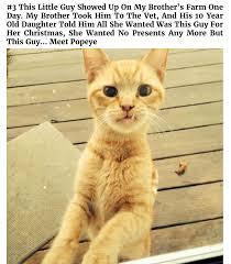 Cats Meme - funny not my cat meme dump album on imgur