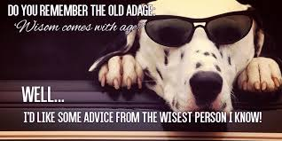 Birthday Meme Dog - happy birthday dog quotes unique funny birthday meme birthday