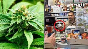 vente de bureau de tabac suisse le pays lance la vente de cannabis en bureau de tabac