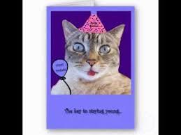 Cat Birthday Cards Funny Cat Birthday Cards Youtube