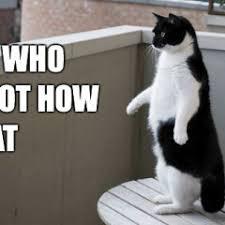 Treadmill Meme - funny meme archives page 185 of 982 cat planet cat planet