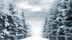 winter trees wallpaper 55 images