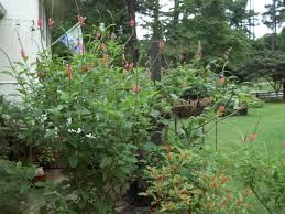 the hummingbird forum porter weed