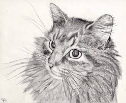 simple pencil drawings of animals easy pencil drawings of animals