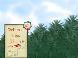3 ways to create a christmas tree forest wikihow