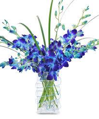 blue orchids true blue orchids floral arrangements city line florist