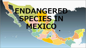 endangered species in mexico mexico is a country rich in wildlife