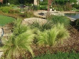 lake dallas landscaping landscaping in denton
