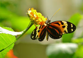 free images nature blossom wing flower bloom animal insect
