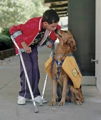 How Does A Guide Dog Help A Blind Person Service Animals Help Humans Live Fuller Lives U2013 Advocacy For Animals