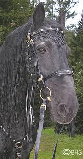 Horse Bridle Decorations Best 25 Horse Bridle Ideas On Pinterest Pretty Horses Black