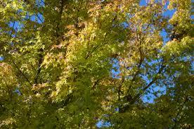 oakland fall color