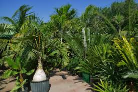 Outdoor Potted Plants Full Sun by Tropical Palm Trees And Plants Assorted Tropical Palms And Cycads