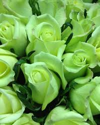 green roses 396 best green flowers images on green flowers green