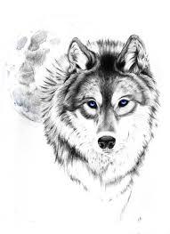 black and grey wolf design best designs