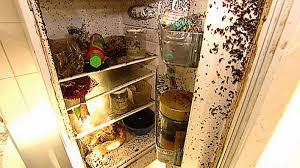 larven in der k che maden in der küche sketchl
