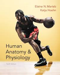 College Anatomy And Physiology Notes Marieb U0026 Hoehn Human Anatomy U0026 Physiology 10th Edition