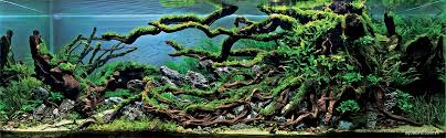 Aquascape Design Layout The Incredible Underwater Art Of Competitive Aquascaping Colossal