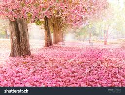 Romantic Tunnel Pink Flower Trees Stock Photo 647136229 Shutterstock