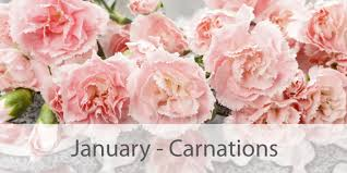 Birth Flower Of January - january flower bouquet vines flowers