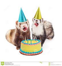 gateau anniversaire animaux fête d u0027anniversaire de furet avec le gâteau photo stock image