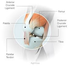 Tendons In The Shoulder Diagram Sports Injury Glossary Everything You Need To Know From Head