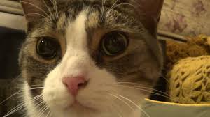 Dog Going Blind What To Do Cat With Stroke Symptoms Youtube