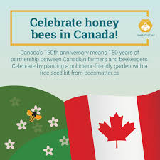 bees matter u2013 bees matter to everyone explore our site to learn more