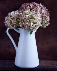 dried hydrangeas different ways to hydrangea flowers you probably didn t