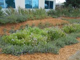 san antonio native plants you don u0027t need to live in seattle to have a rain garden texas