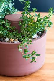 self watering planters joey roth