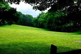 field beautiful nature tranquil peaceful open field serene great