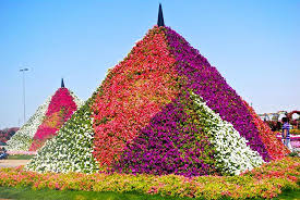 dubai miracle garden all you need to know before you go with