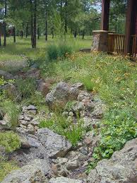 native plant garden flagstaff landscaping natural by design northern arizona native