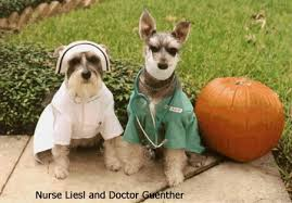 Funny Halloween Animal Costumes Funny Image Collection Funny Animal Halloween Pictures