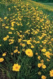 west texas native plants drought tolerant plants southern living