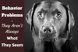 dog barks when we leave labrador behavior problems what are they really